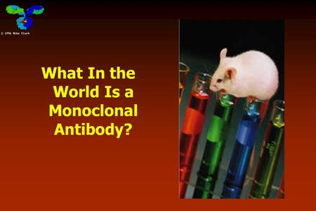 What In the World Is a Monoclonal Antibody?. Antibodies x Antigens.