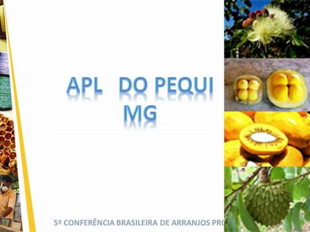 APL	 DO PEQUI MG.