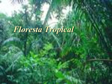 Floresta Tropical.