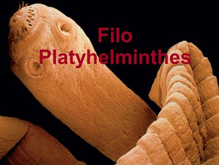 Filo Platyhelminthes.
