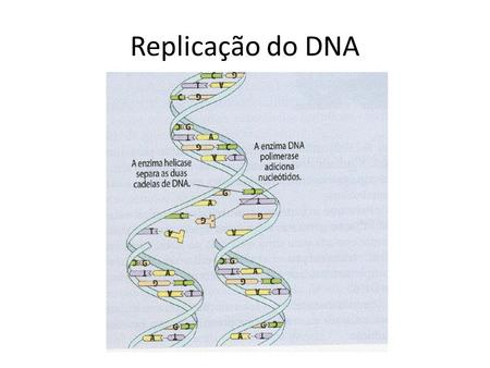 Replicação do DNA.