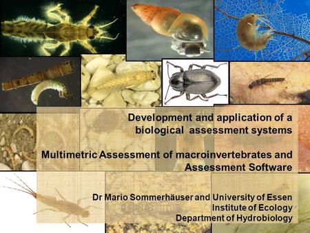 Development and application of a biological assessment systems Multimetric Assessment of macroinvertebrates and Assessment Software Dr Mario Sommerhäuser.