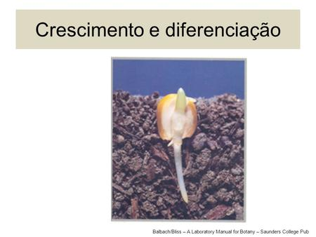 Crescimento e diferenciação Balbach/Bliss – A Laboratory Manual for Botany – Saunders College Pub.