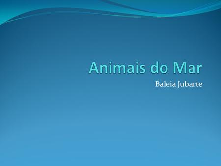 Animais do Mar Baleia Jubarte.