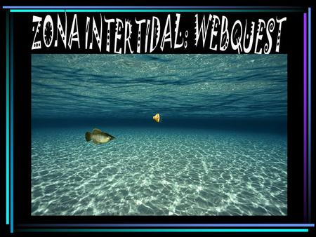 ZONA INTERTIDAL: WEBQUEST