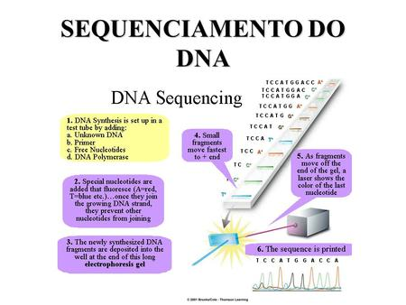 SEQUENCIAMENTO DO DNA.