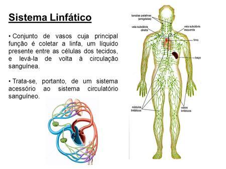 Sistema Linfático e suas funções