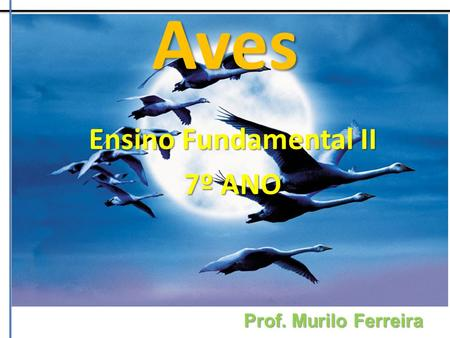 Ensino Fundamental II 7º ANO