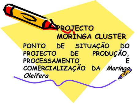 PROJECTO MORINGA CLUSTER