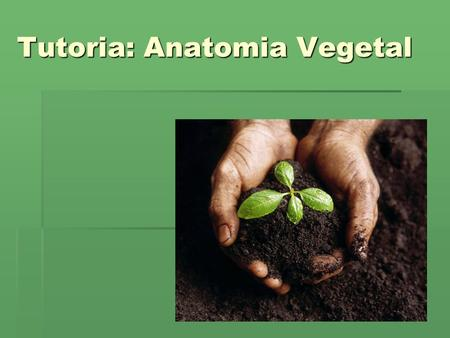 Tutoria: Anatomia Vegetal