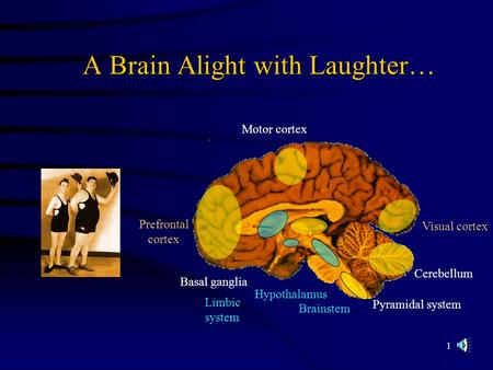 1 A Brain Alight with Laughter… Visual cortex Prefrontal cortex Motor cortex Basal ganglia Hypothalamus Cerebellum Pyramidal system Brainstem Limbic system.