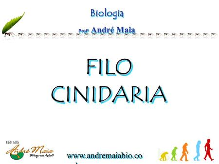 Www.andremaiabio.co m.br Biologia Profº André Maia Biologia FILO CINIDARIA FILO CINIDARIA.