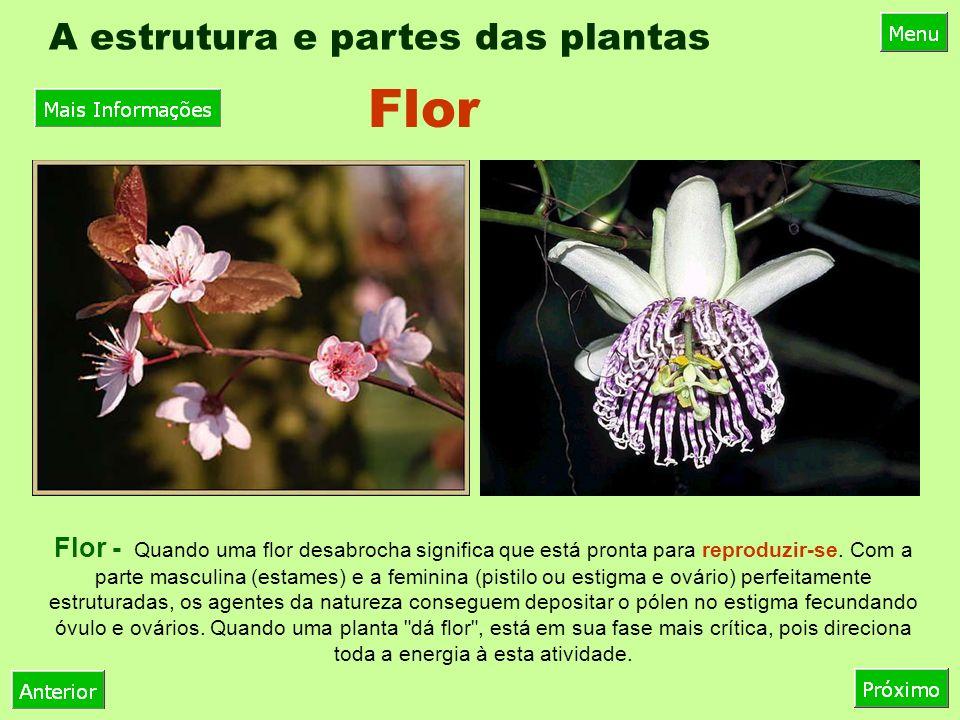A estrutura e partes das plantas Fruto - É o ovário fecundado que incumbe-se de proteger a maior riqueza de uma planta, a semente, guardando-a em seu interior.