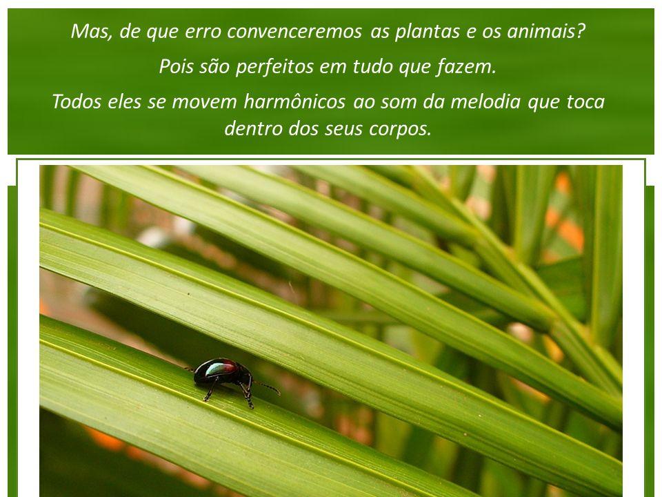 Mas, de que erro convenceremos as plantas e os animais.