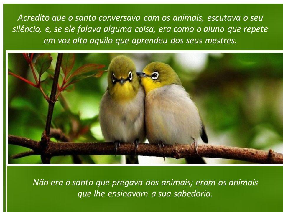 Acredito que o santo conversava com os animais, escutava o seu silêncio, e, se ele falava alguma coisa, era como o aluno que repete em voz alta aquilo que aprendeu dos seus mestres.