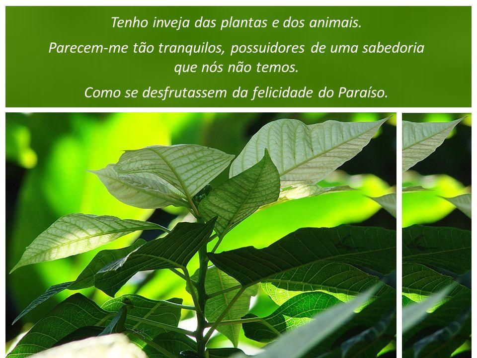 Tenho inveja das plantas e dos animais.