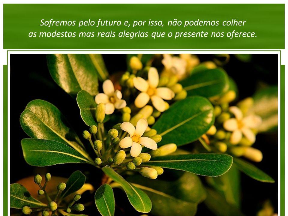 Sofremos pelo futuro e, por isso, não podemos colher as modestas mas reais alegrias que o presente nos oferece.