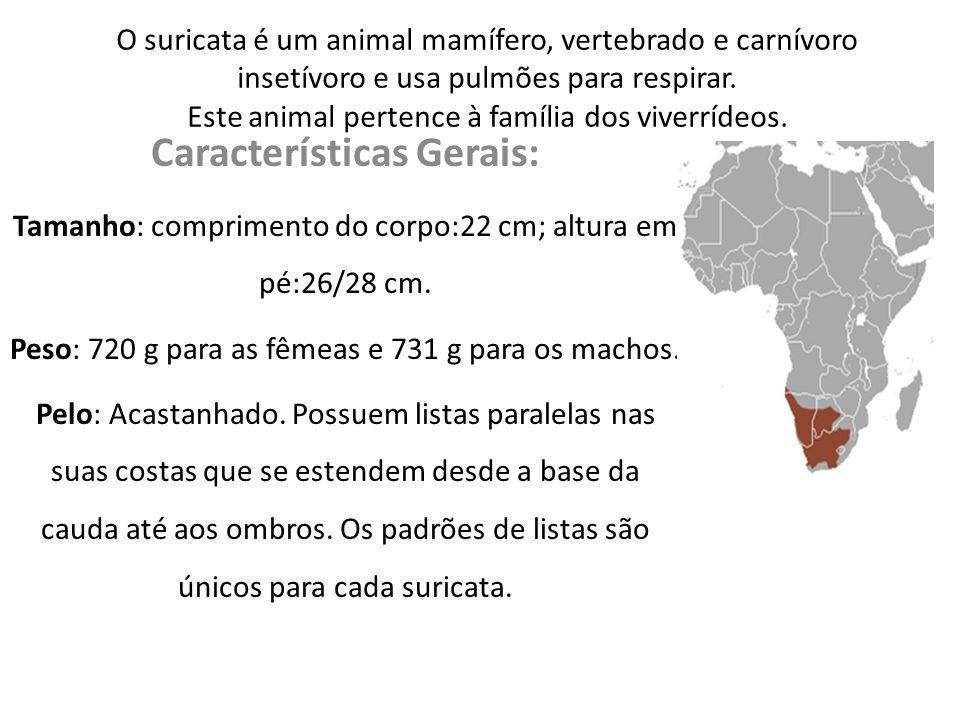 Características Gerais: Tempo de vida: Em ambiente selvagem pode viver 10 anos; variando entre 5 e 12 anos.