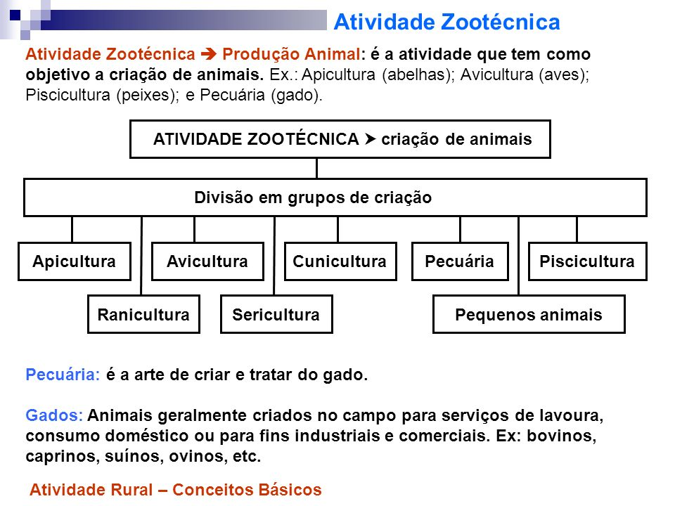 Atividade Agroindustrial Atividade Zootécnica Produção Animal: é a atividade que tem como objetivo a criação de animais.