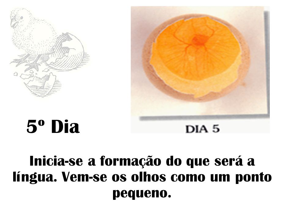 Desenvolvimento de Órgãos Externos (5 a 15 Dias)