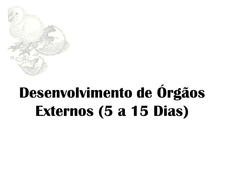 6º Dia O embrião que cresceu notavelmente, tem forma de C.