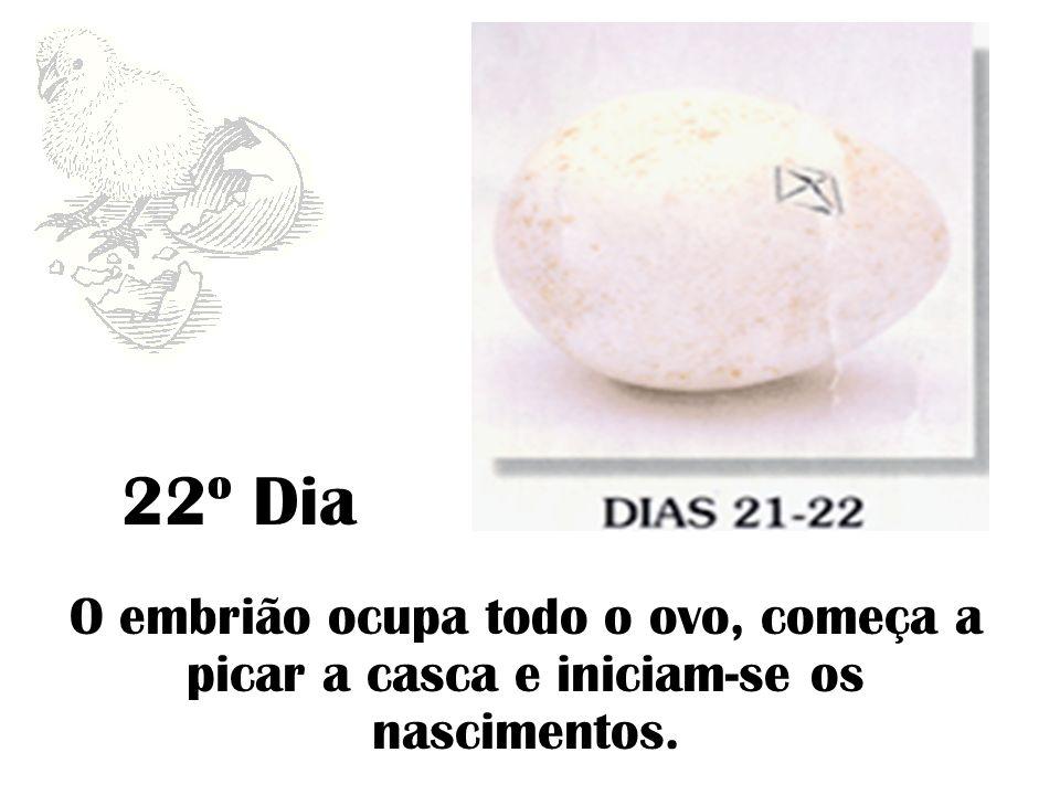 23º Dia Nascimento.