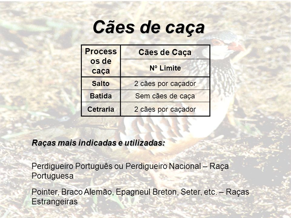 NÚMERO DE EXEMPLARES PERMITIDO ABATER POR DIA E POR CAÇADOR Actualmente são 3 perdizes por dia e por caçador.