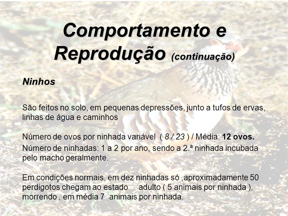 Comportamento e Reprodução (continuação) Incubação: Inicia-se com a postura do último ovo e dura cerca de 23 dias
