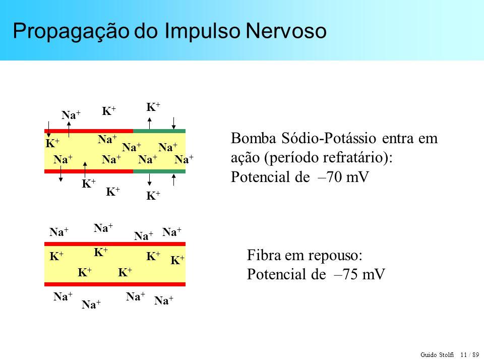 Guido Stolfi 12 / 89 Modelo de um Elemento de Fibra Nervosa g(K) = 20 g(Na) 0 = 4 g(Cl)g(Na) P = 500 g(Na) 0