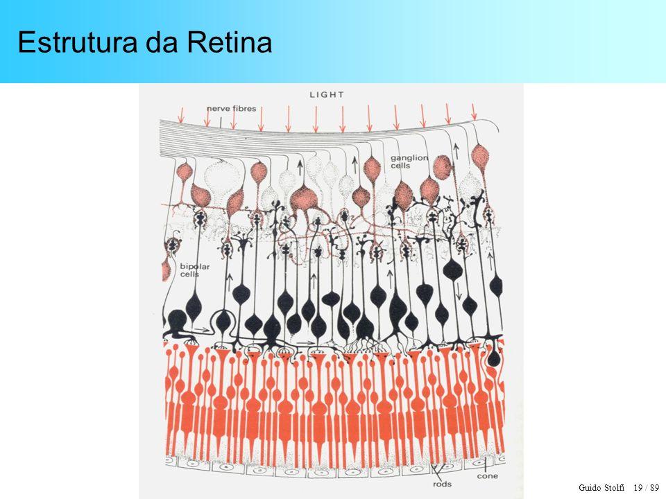 Guido Stolfi 20 / 89 Retina Ocular