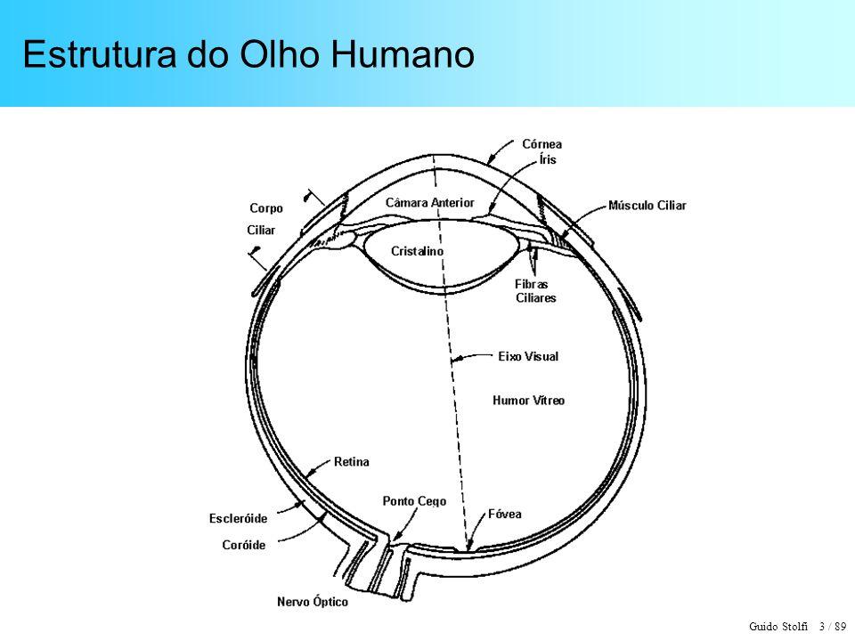 Guido Stolfi 4 / 89 Estrutura da Retina