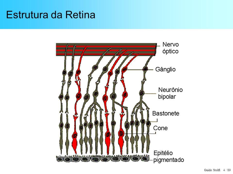 Guido Stolfi 5 / 89 Características da Retina 7.000.000 de Cones – células sensíveis à intensidade e à cor (visão Fotópica) 130.000.000 de Bastonetes – sensíveis apenas à intensidade (Visão Escotópica) 1.000.000 de fibras nervosas no Nervo Óptico Fisiologicamente, é uma extensão do córtex cerebral