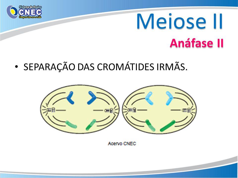 Meiose II Telófase II REAPARECIMENTO DO NUCLÉOLO E DA CARIOTECA. CITOCINESE.