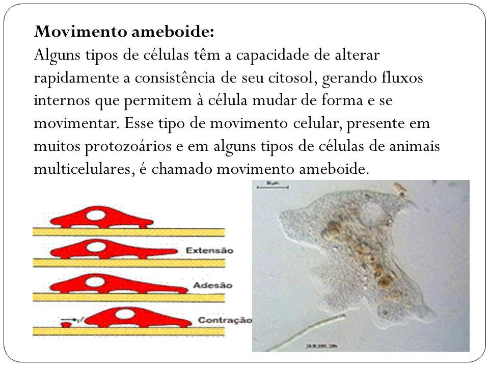 Alguns dos organoides (também chamados de orgânulos ou organelas) do citoplasma são membranosos, isto é, são revestidos por uma membrana lipoprotéica : retículo endoplasmático, mitocôndrias, sistema golgiense,lisossomos, peroxissomos, glio xissomos, cloroplastos e vacúolos.