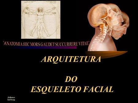 ARQUITETURA DO ESQUELETO FACIAL