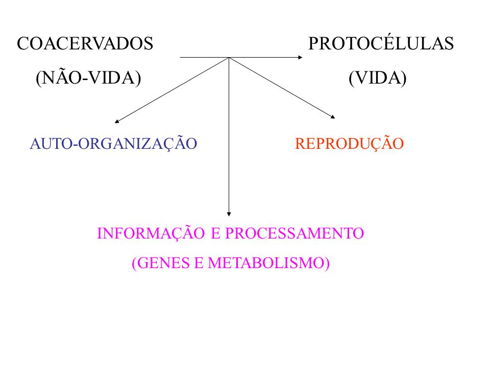 COACERVADOS PROTOCÉLULAS (NÃO-VIDA) (VIDA) AUTO-ORGANIZAÇÃO INFORMAÇÃO E PROCESSAMENTO (GENES E METABOLISMO) REPRODUÇÃO