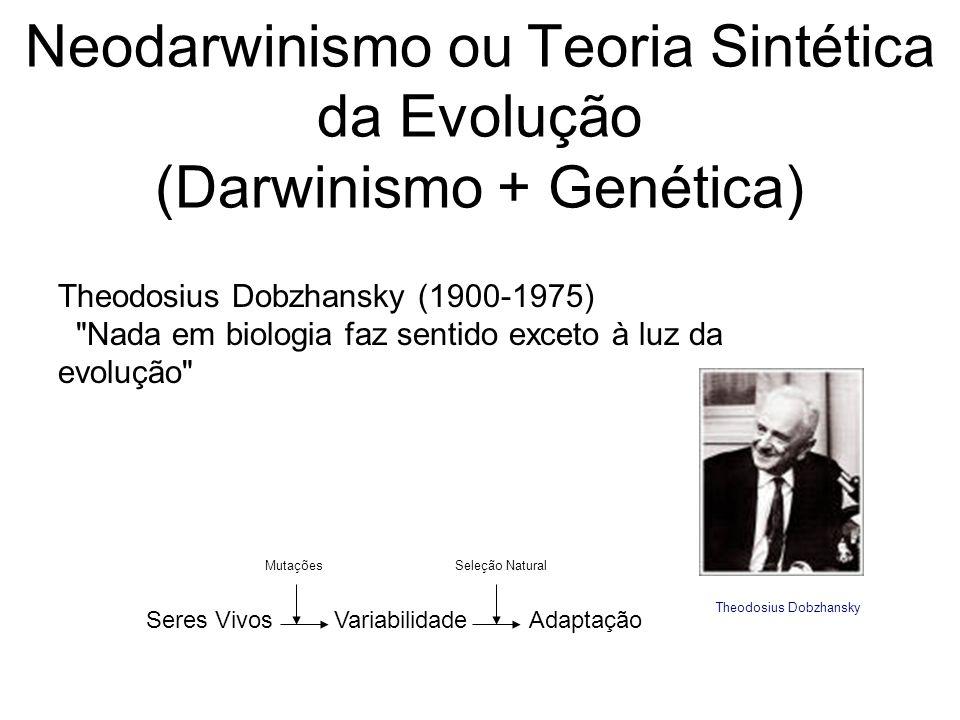 Neodarwinismo ou Teoria Sintética da Evolução (Darwinismo + Genética) Theodosius Dobzhansky (1900-1975) Nada em biologia faz sentido exceto à luz da evolução Seres Vivos Variabilidade Adaptação Mutações Seleção Natural Theodosius Dobzhansky