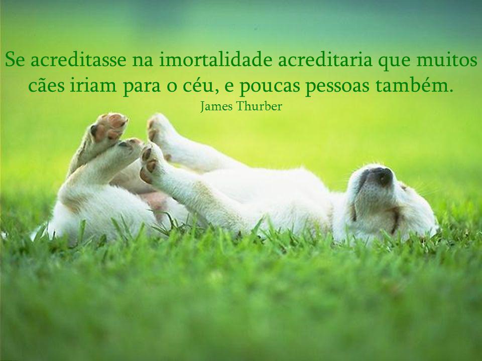 Se acreditasse na imortalidade acreditaria que muitos cães iriam para o céu, e poucas pessoas também.
