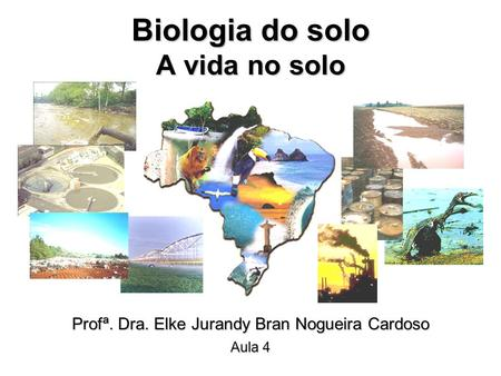 Biologia do solo A vida no solo
