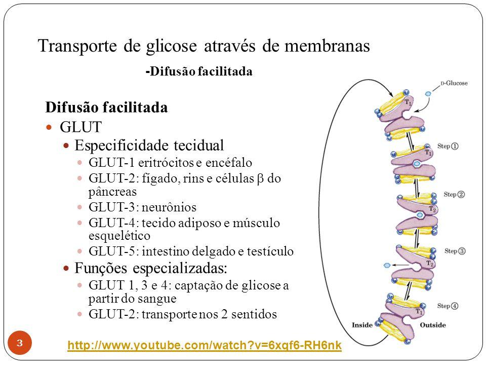 Transporte de glicose através de membranas 4 Co-transporte monossacarídeo-Na + o Processo mediado por carreador -Na + o Envolve gasto de energia o Células epiteliais do intestino,túbulos renais s e plexo coróide