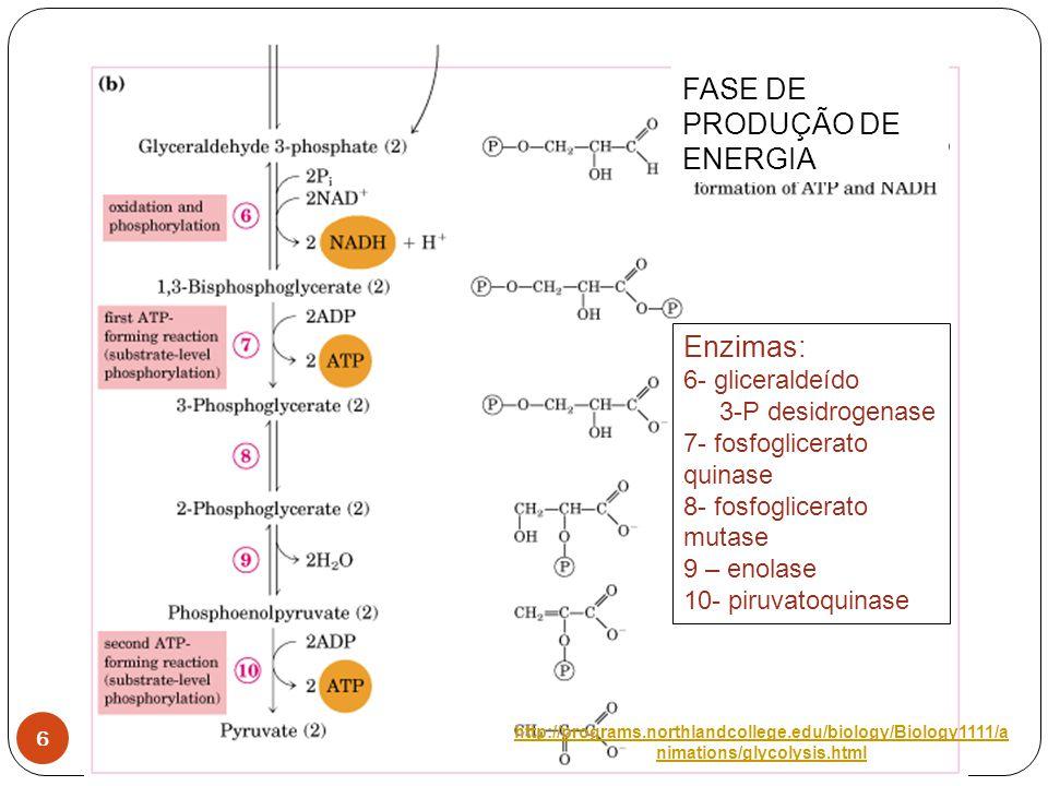 7 Regulação da glicólise por enzimas alostéricas