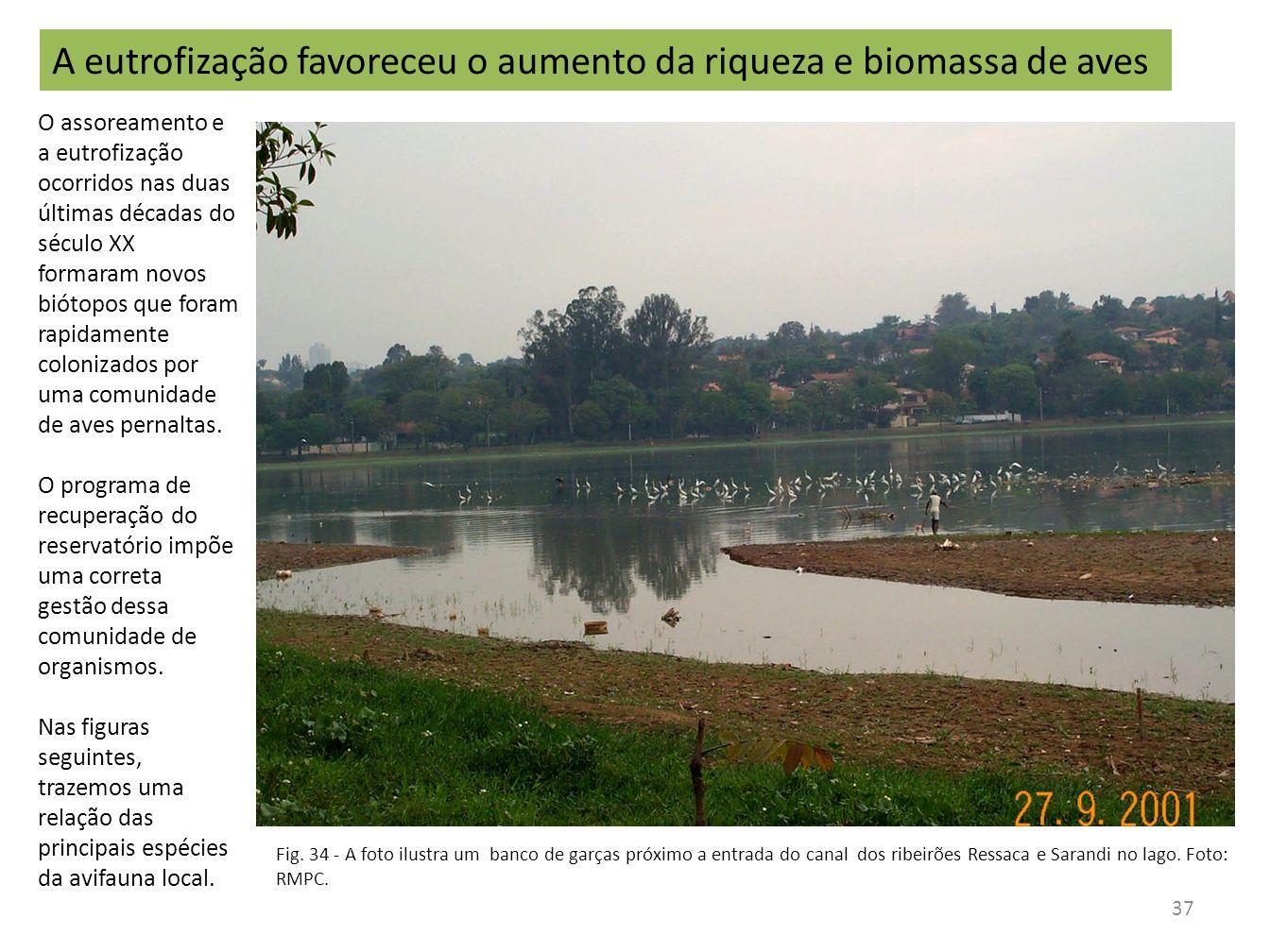 1 - Gallinula chloropus (Frango-d água-comum) 2 - Podilymbus podiceps (Mergulhão) - Plumagem reprodutiva 2a - Plumagem de descanso 3 - Tringa solitaria (Maçarico-solitário) 4 - Vanellus chilensis (Quero-quero) 5 - Jacana jacana (Jaçanã) - Adulto 5a - Jovem 6 - Phalacrocorax brasilianus (Biguá) 7 - Aramus guarauna (Carão) 8 - Dendrocygna bicolor (Marreca-caneleira) 9 - Dendrocygna viduata (Irerê) 10 - Dendrocygna autumnalis (Asa-branca) 11 - Netta erythrophthalma (Paturi-preta) 12 - Amazonetta brasiliensis (Ananaí) 13 - Casmerodius albus (Garça-branca-grande) 14 - Egretta thula (Garça-branca-pequena) 15 - Nycticorax nycticorax (Savacu) 16 - Butorides striatus (Socozinho) 17 - Tringa flavipes (Maçarico-de-perna-amarela) 38 Aves pernaltas encontradas na represa da Pampulha (2001).