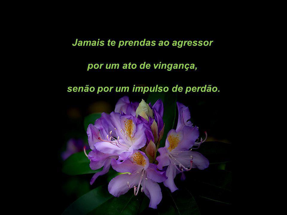 Jamais te prendas ao agressor por um ato de vingança, senão por um impulso de perdão.