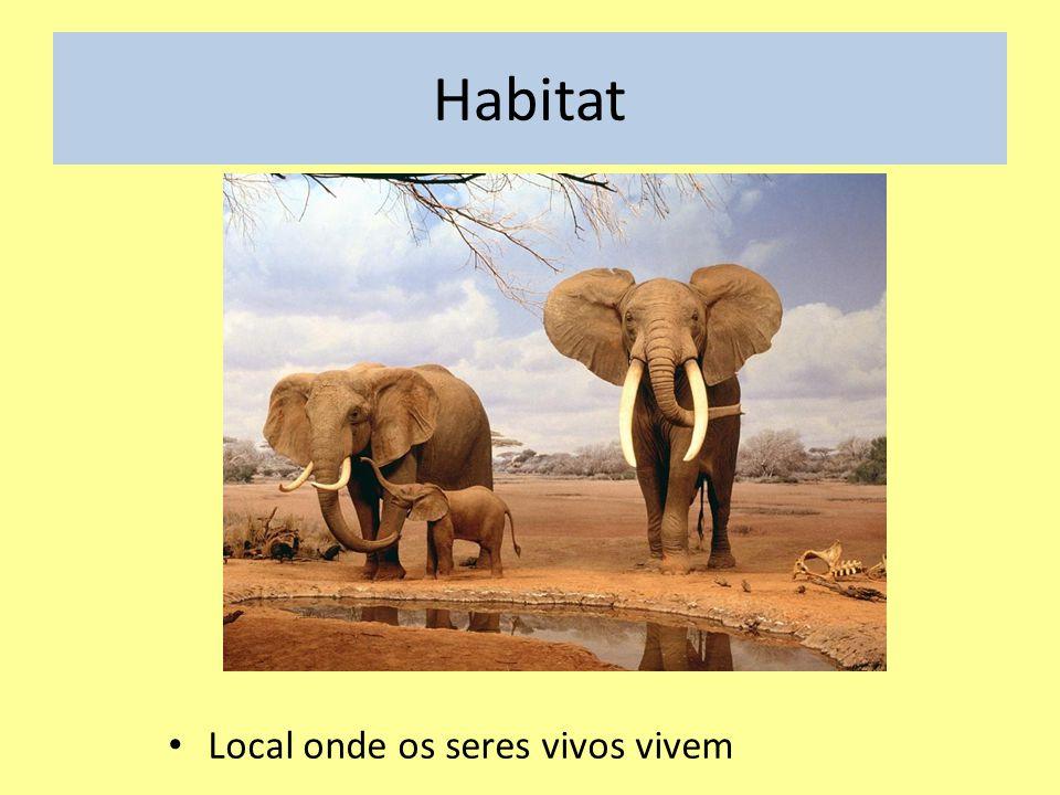 Nicho ecológico Atividade desempenhada pelos seres vivos no Ambiente.