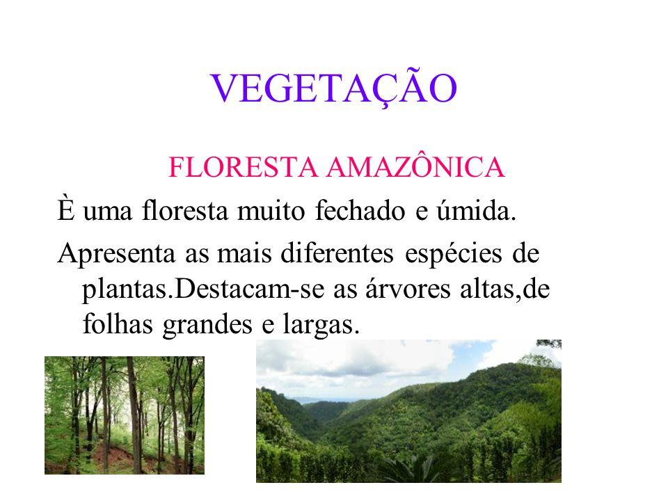 VEGETAÇÃO FLORESTA AMAZÔNICA È uma floresta muito fechado e úmida.