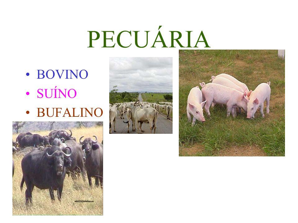 PECUÁRIA BOVINO SUÍNO BUFALINO