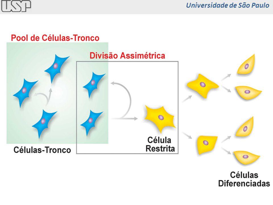 Célula-tronco Instestinal Universidade de São Paulo