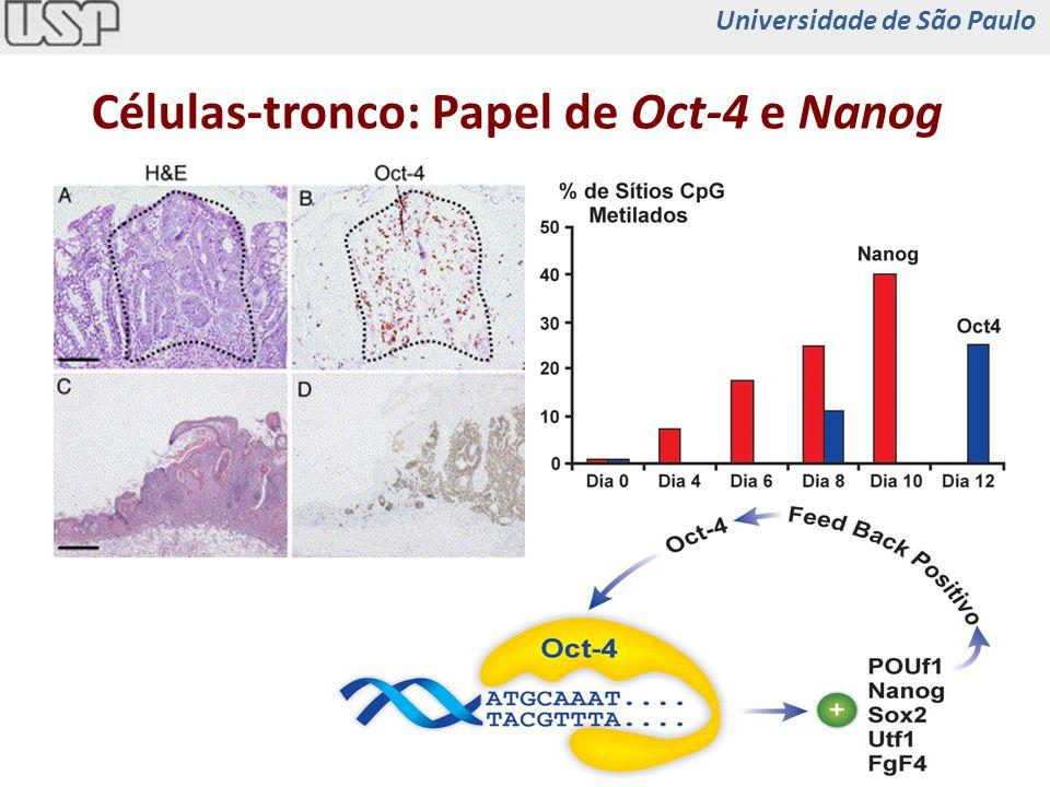 TrofoectodermaEndoderma Progenitores Cels Maduras Embrião +Gata4/5+Cdx2 Células BMacrófagos +Cebp Célula Acinar Célula +Pdx1, Ng3n, Mafa MúsculosFibroblastos +Myod Progenitores Hematopoéticos -Pax5 Reprogramação de Células com Base em Fatores de Transcrição Massa Interna CT Embrionária +Oct3/4 +Sox2 +Klf4 (+cMyc) Massa Interna CT Embrionária iPS Universidade de São Paulo