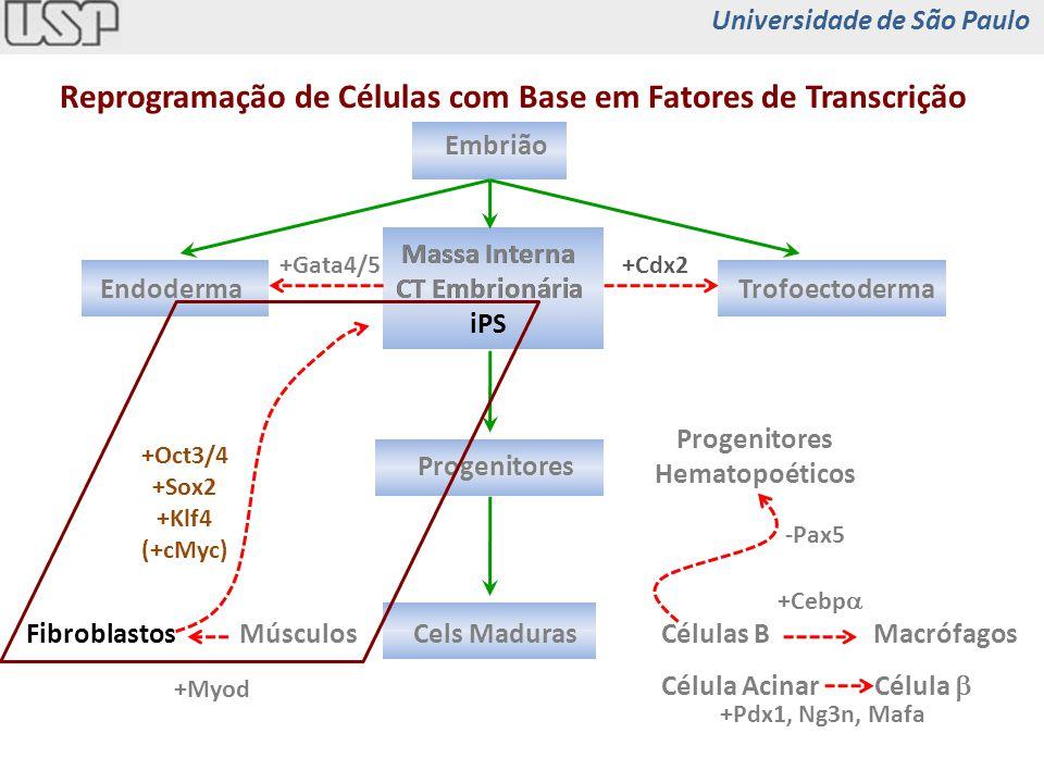 Células Tronco Células tronco pluripotentes células tronco embrionárias (blastocisto 4-5 dias) células embrionárias germinais (feto 5-9 semanas) iPS (induced pluripotent stem cell) Células tronco de adultos medula óssea vasos músculos esqueléticos fígado cérebro dentes intestino pele coração Universidade de São Paulo