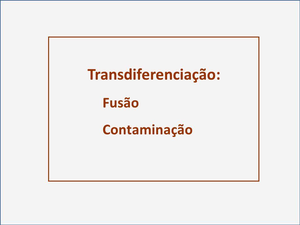 Pesquisa Básica Pesquisa Translacional Pesquisa Clínica Evidência Médica Sólida Mudança da Abordagem Médica Resultados Avaliação Universidade de São Paulo